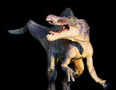 A Spinosaurus Dinosaur Stands Against a Black Background