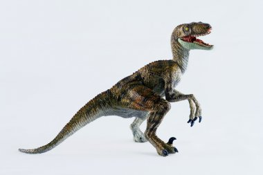 A Velociraptor Stands Against a White Background