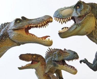 A Spinosaurus, Tyrannosaurus Rex, Velociraptor and Allosaurus