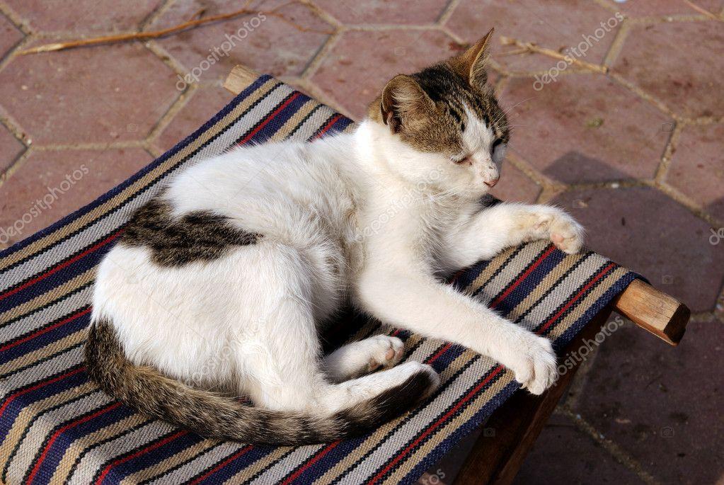 Kleine Weiße Punkte Im Stuhl Katze