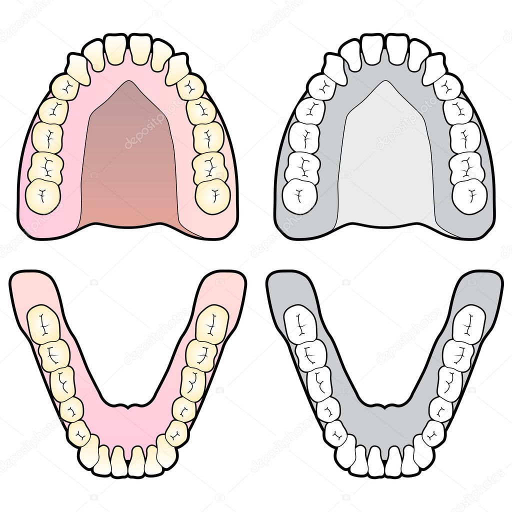 Tooth dental chart stock vector gleighly 8373042 diagram of human teeth and gums vector by gleighly ccuart Choice Image