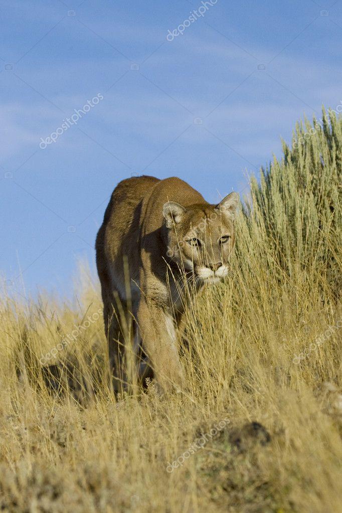cougar zdarma v Keni ex amish seznamka