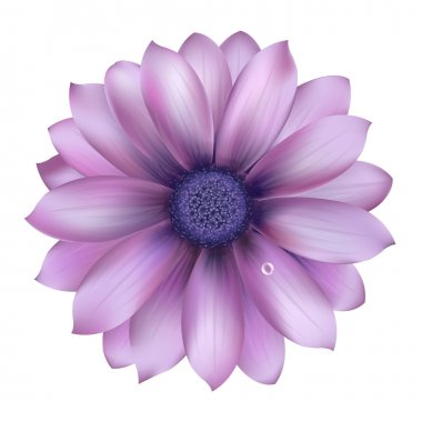 Lilac Flower With Water Drop, Vector Background stock vector