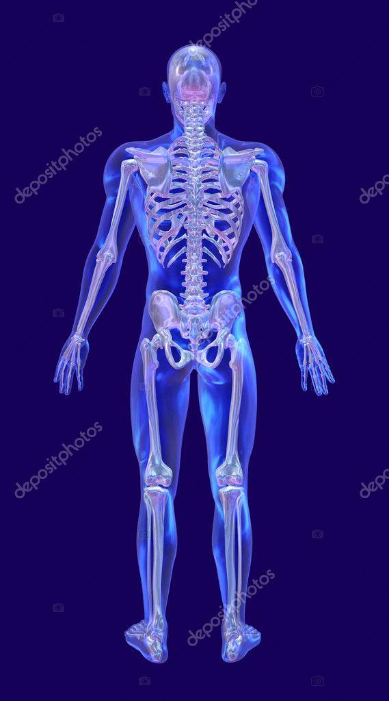 hombre de cristal azul con esqueleto iridiscente - vuelta — Fotos de ...
