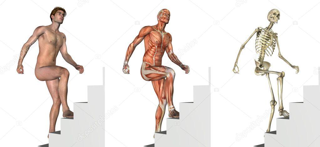 Recubrimientos anatómicas: Subir escaleras — Foto de stock ...