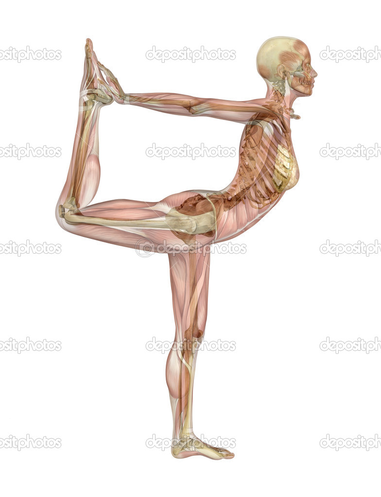 Yoga Dancer Pose Muscle Over Skeleton Stock Photo Aliencat