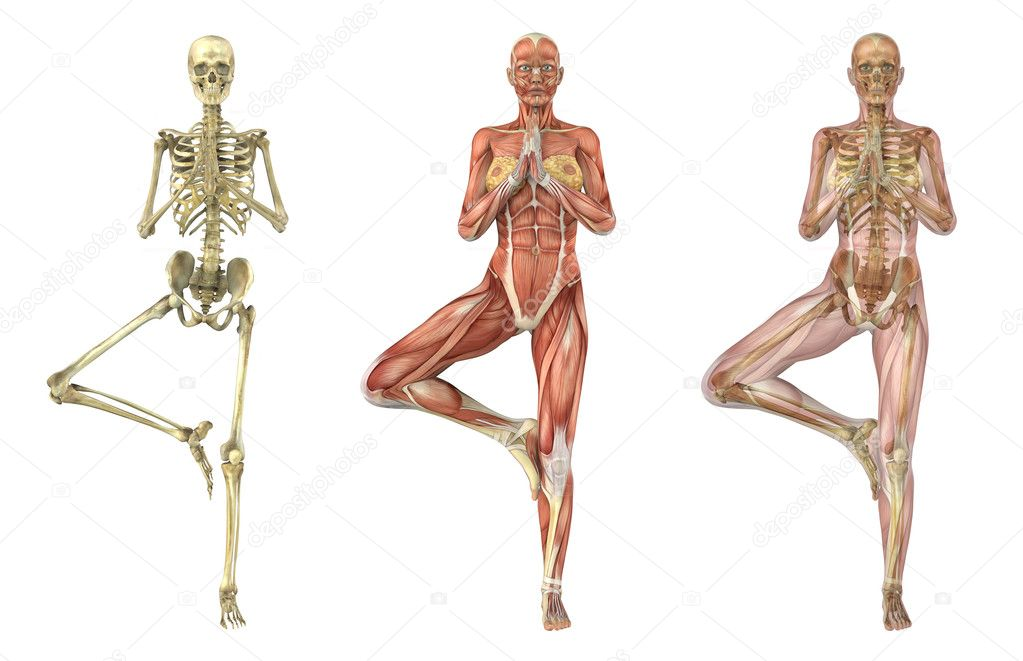 kinetic anatomy 3e levers work to create movement in the