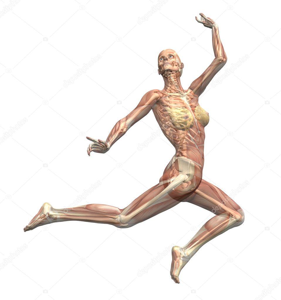 anatomie in beweging - vrouw springen — Stockfoto © AlienCat #8285862