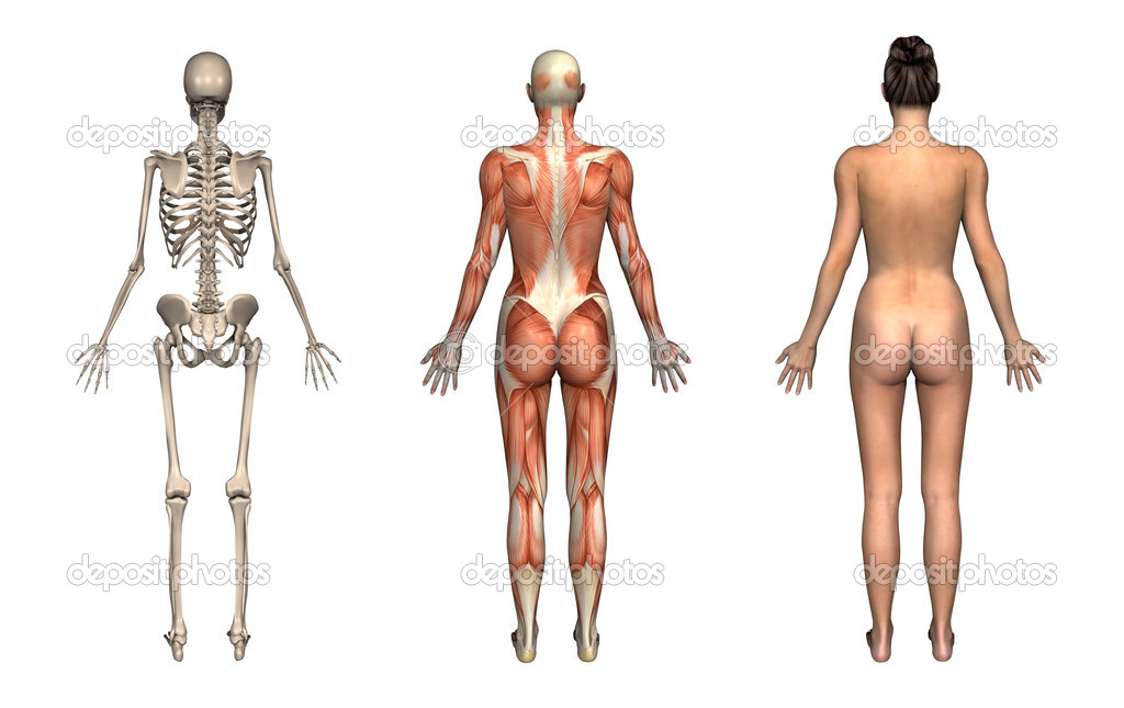 Anatomy Overlays - Female - Back — Stock Photo © AlienCat #8295685
