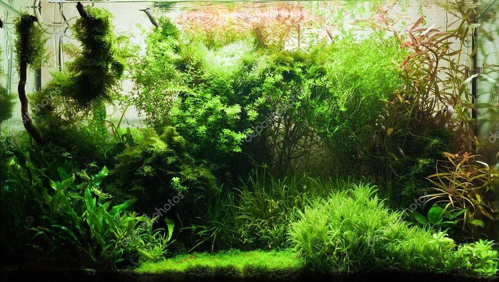 Elegant freshwater aquarium