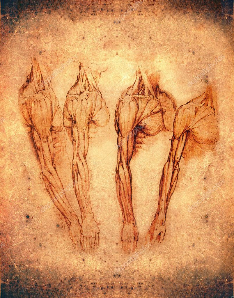 Leonardo da Vinci Stil Anatomie Arme — Stockfoto © lollok #8313260