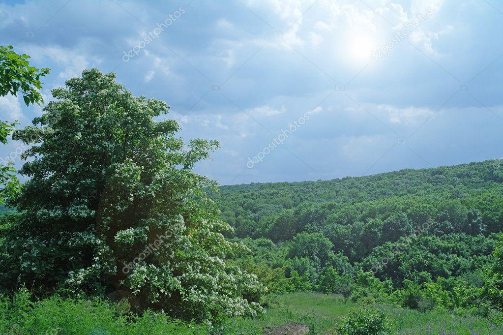 Doğa Arka Plan Açık Bahar Yaz Yeşil çimen Ve Mavi Gökyüzü Manzara