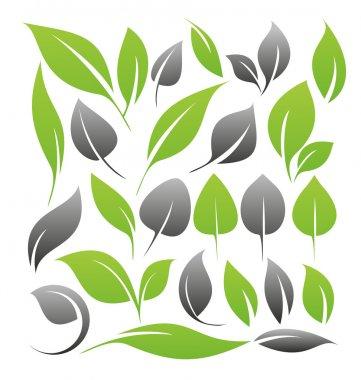 Set of leaf design elements stock vector