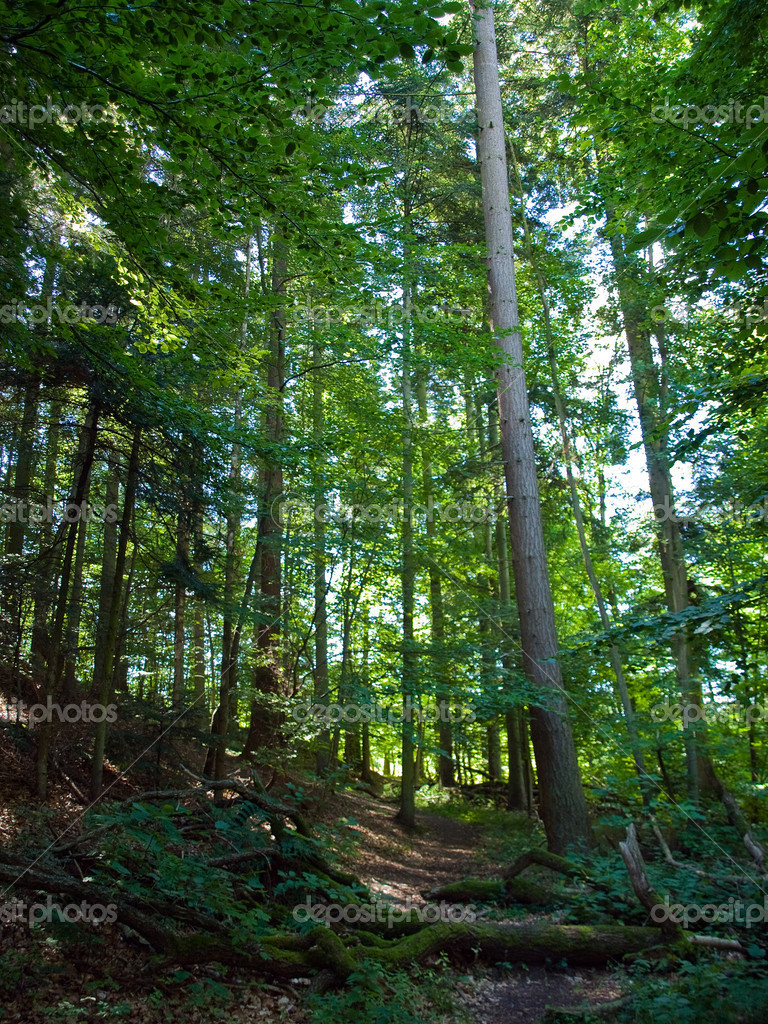 Beautiful Forest Vertical Background Stock Photo