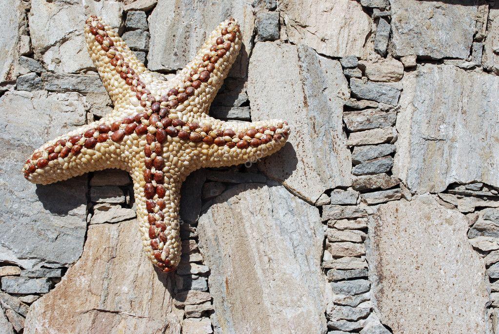 Starfish on wall