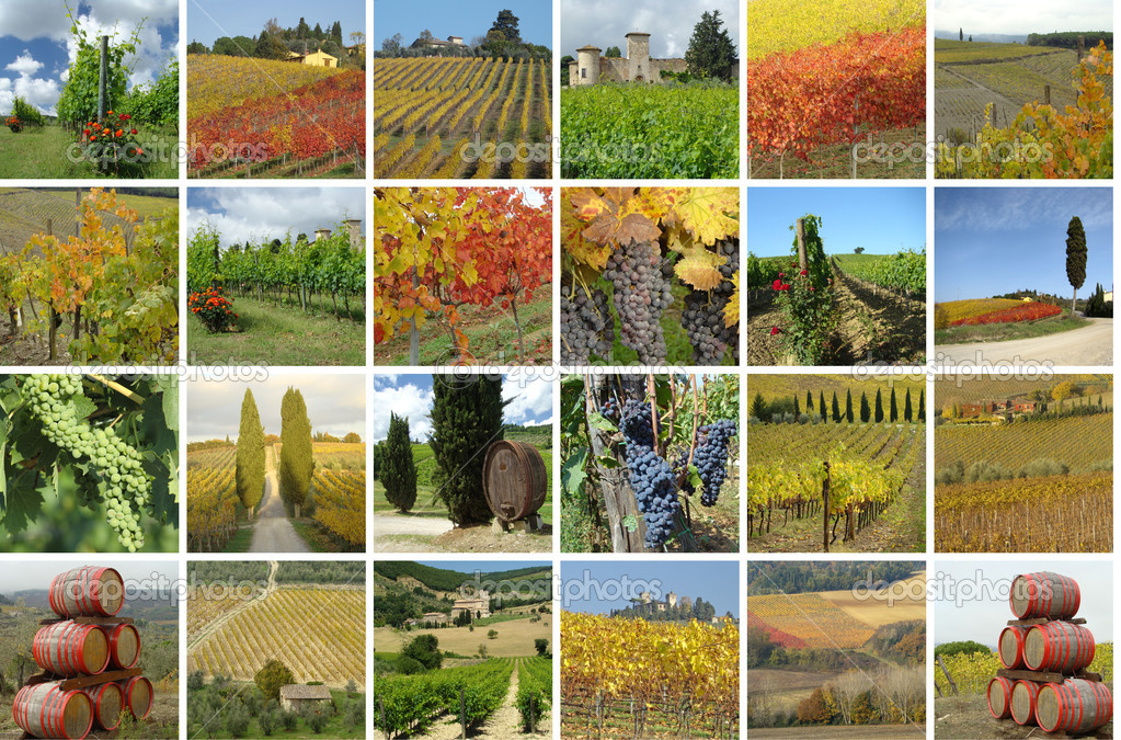 Colorful vineyard collage