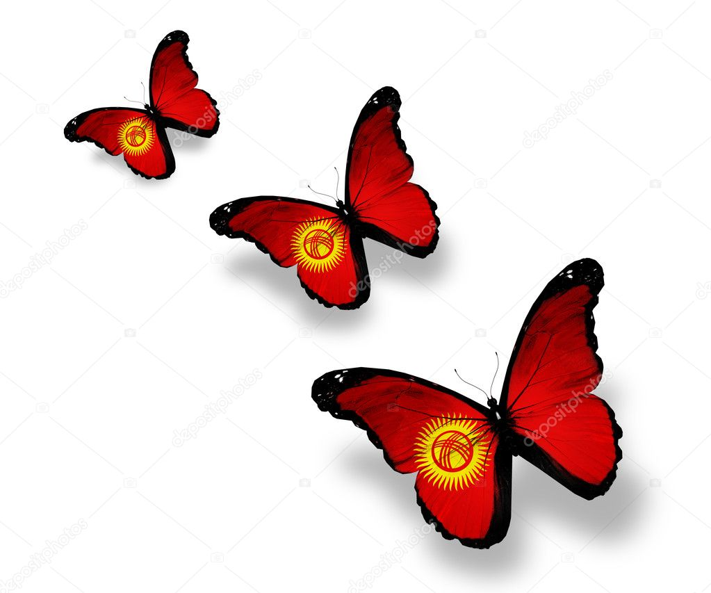 Three Kyrgyz flag butterflies, isolated on white