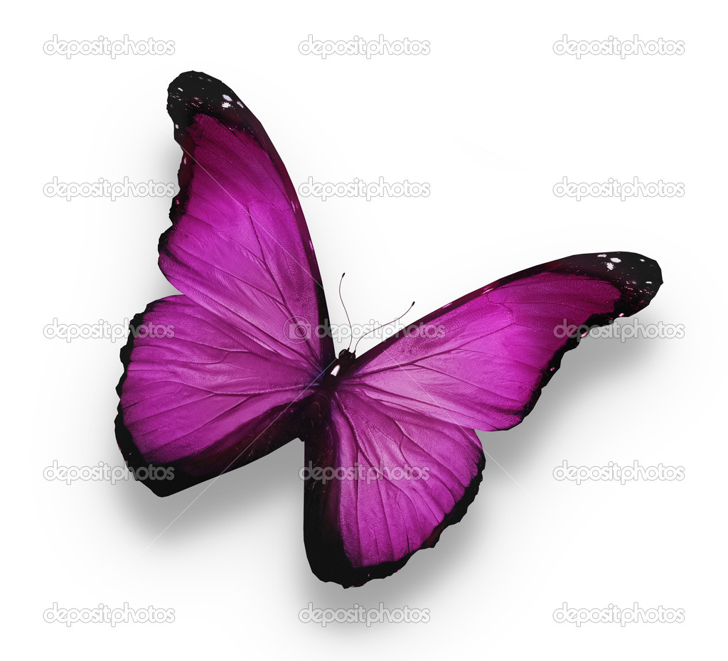 Dark violet butterfly, isolated on white