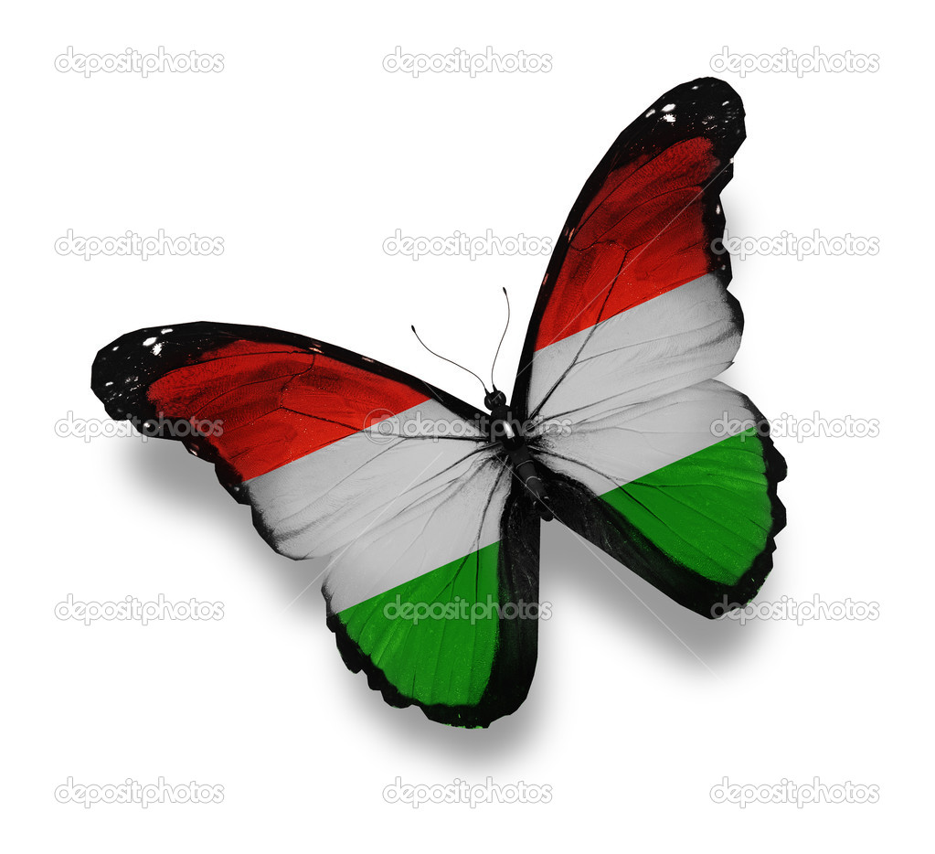 Hungarian flag butterfly, isolated on white