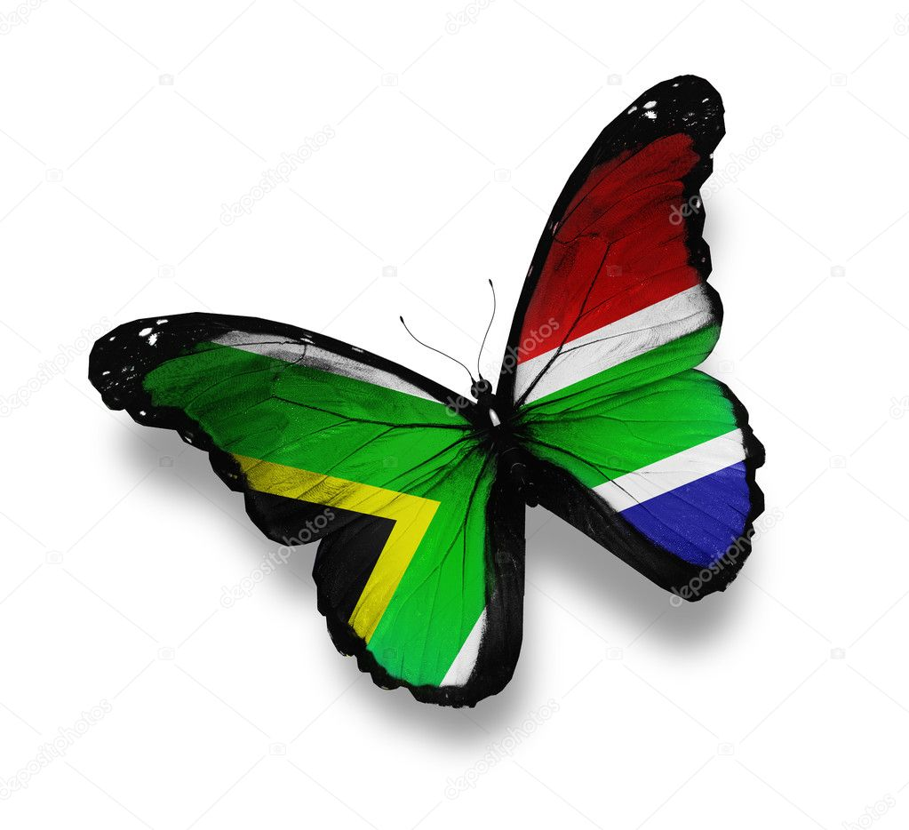 South African flag butterfly, isolated on white