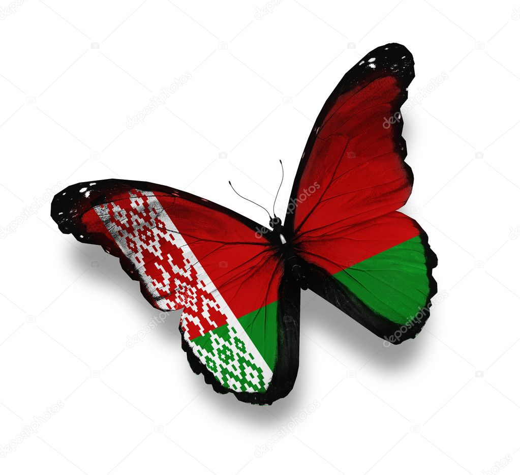 Belarusian flag butterfly, isolated on white