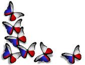 Česká vlajka motýly, izolovaných na bílém pozadí