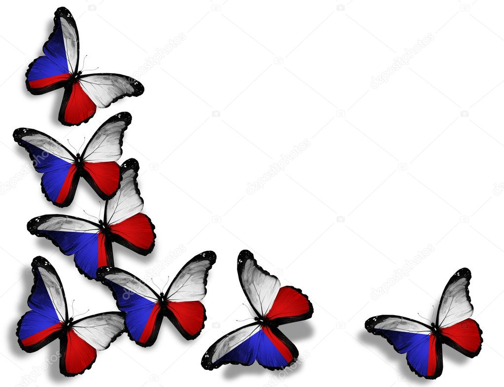 Czech flag butterflies, isolated on white background