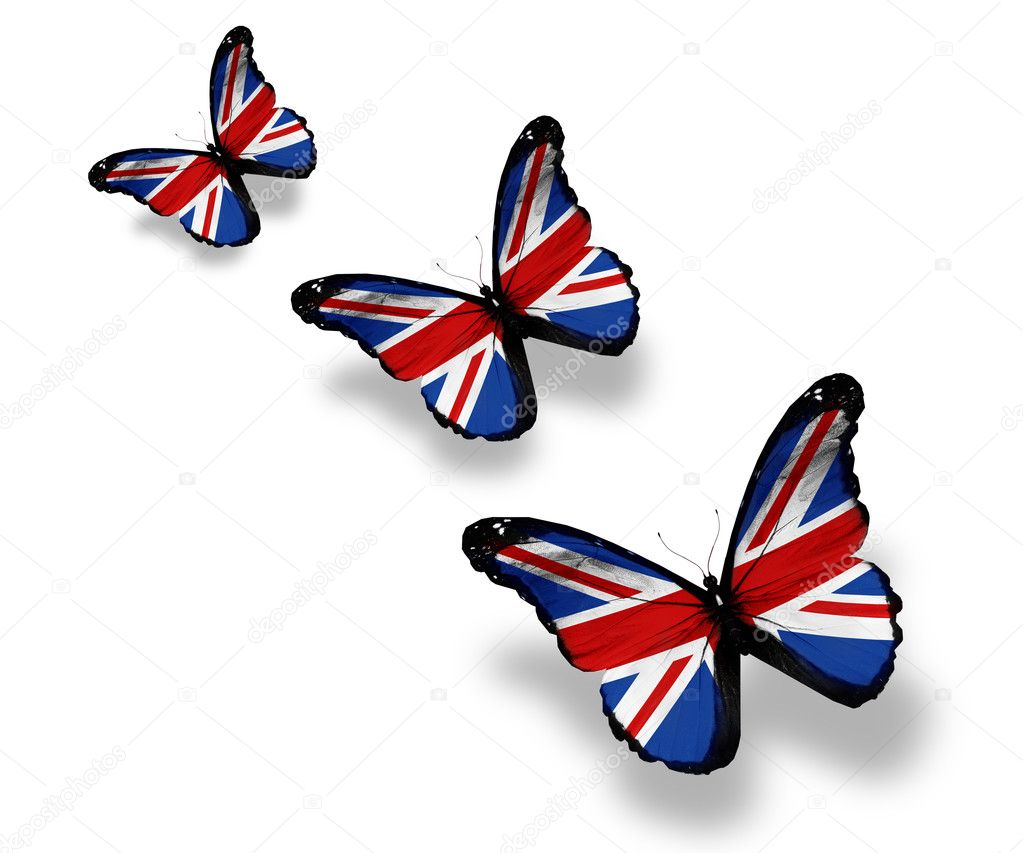 Three english flag butterflies, isolated on white