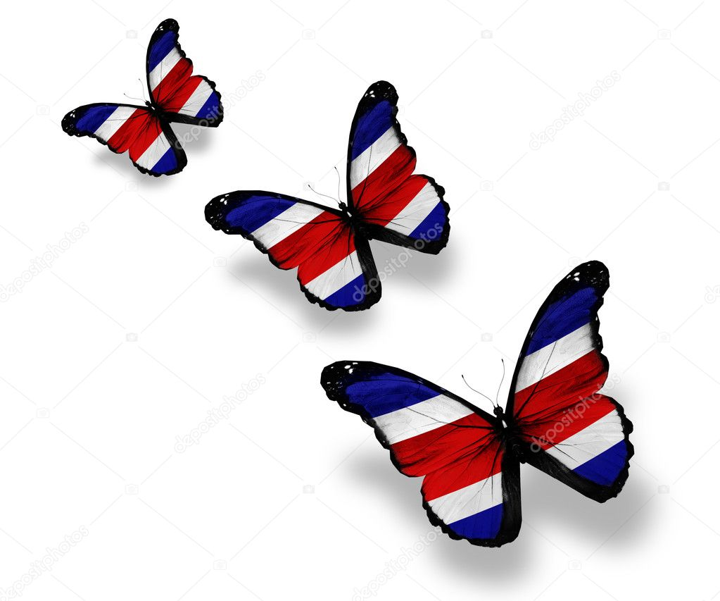 Three costa rica flag butterflies isolated on white stock photo three costa rica flag butterflies isolated on white stock photo biocorpaavc Gallery