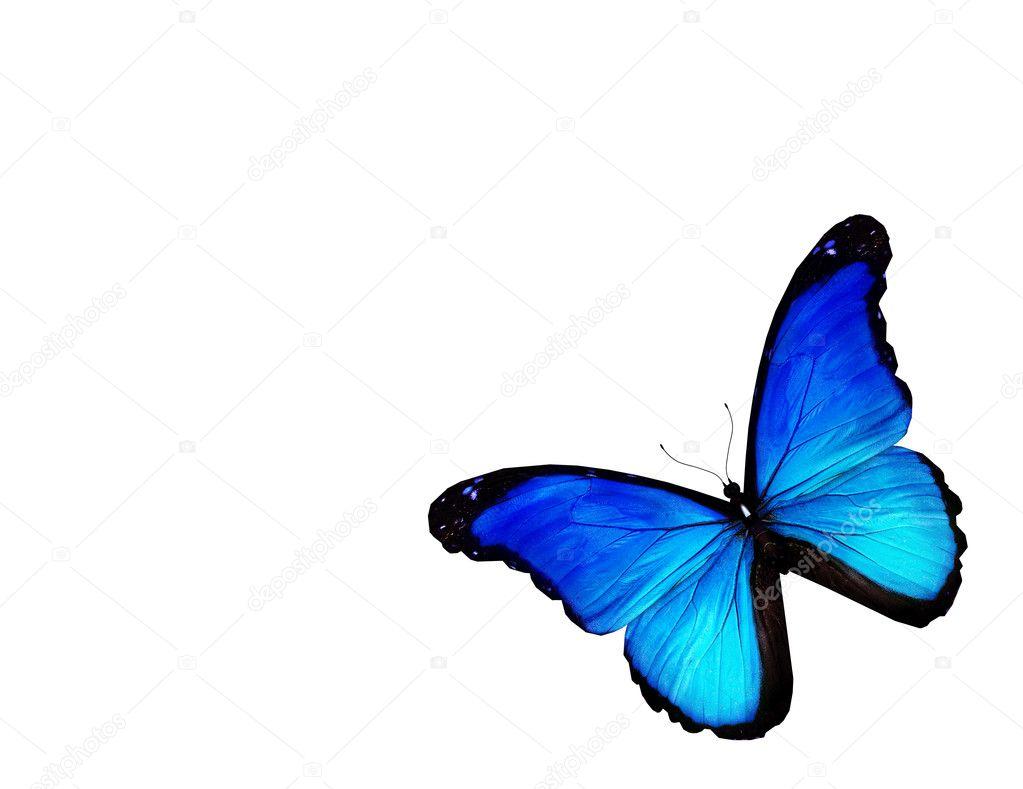 Foto Farfalla Bianco Farfalla Blu Su Sfondo Bianco Foto Stock