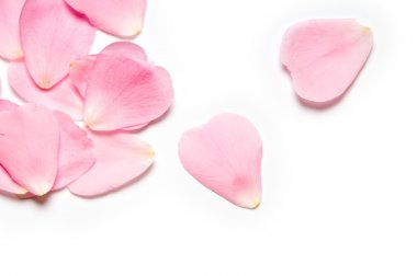 Pink rose petals on white background stock vector