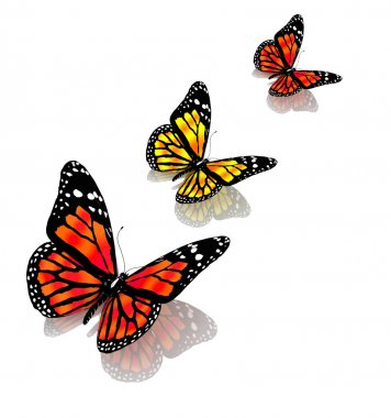 The butterflies of yellow color