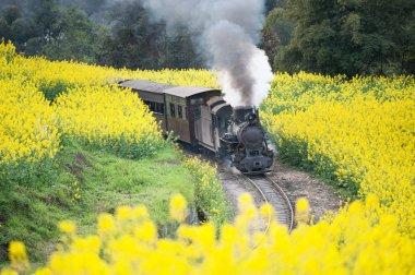 Jia Yang steam train, China