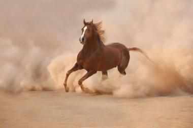 Arabian horse in desert storm