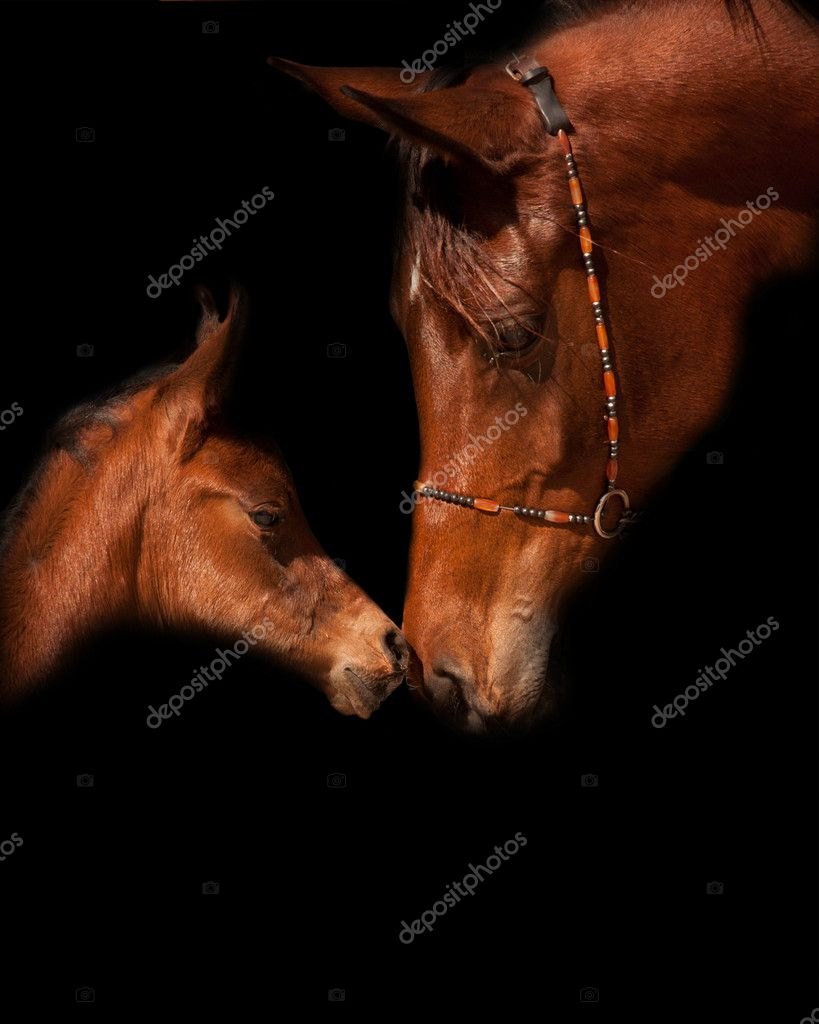 ᐈ Baby Horses Stock Pictures Royalty Free Baby Horse Images Download On Depositphotos