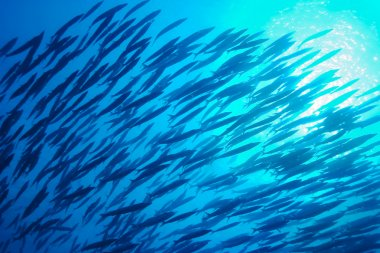 School of Fish, Underwater