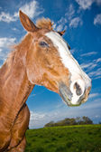 Fotografia cavallo in campo