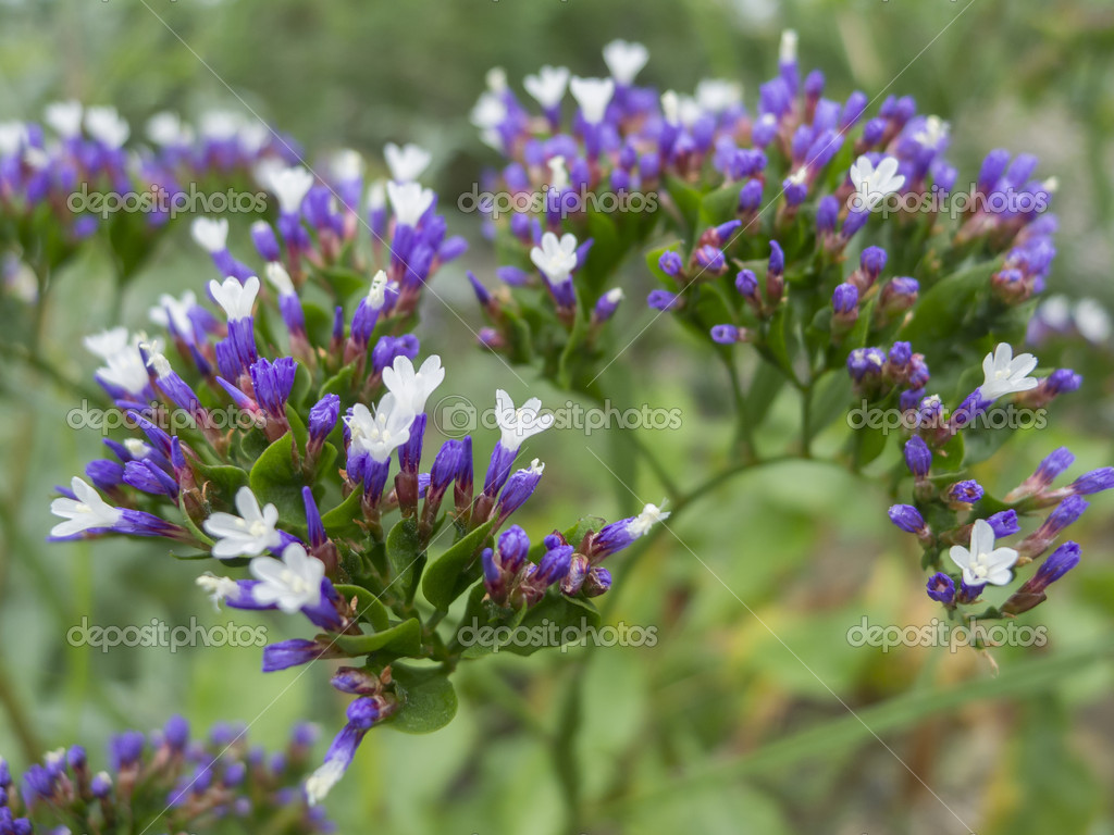 White Flowers Stock Photo Alessandrozocc 9703109
