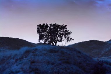 Lonely blue tree