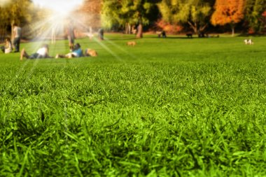 Park scene with detail grass in foreground and blurred enjoying nature in the background with sun flare rays breaking through stock vector