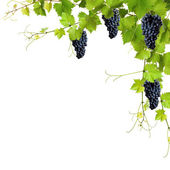 Fotografie Collage of vine leaves and blue grapes