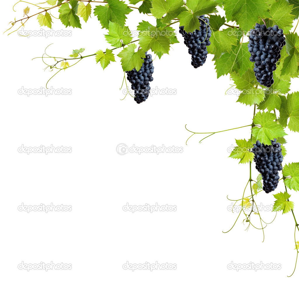 Collage Of Vine Leaves And Blue Grapes Stock Photo C Rsedlacek