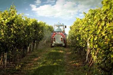 Tractor in the vineyard spraying toxic protection