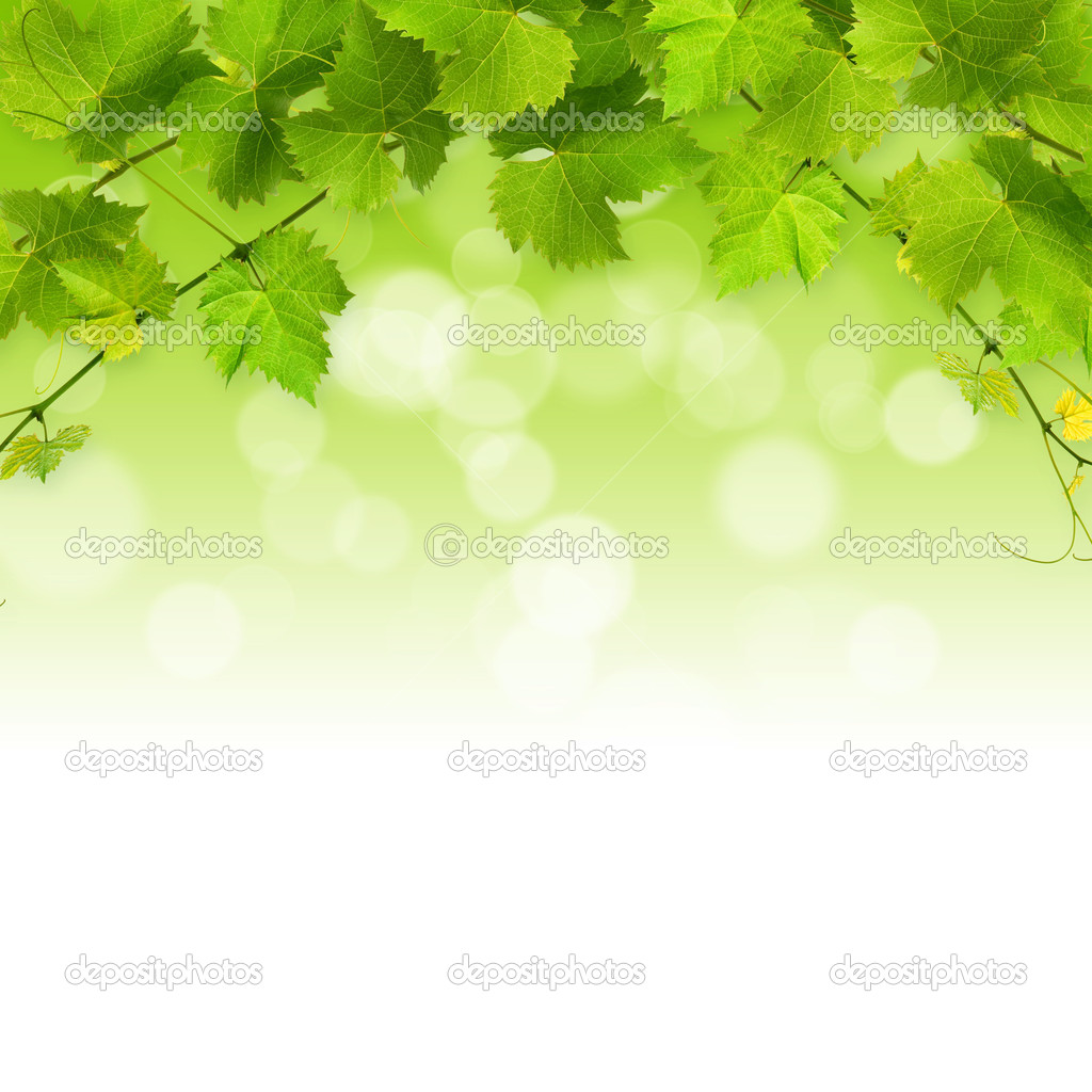 Bunch of green vine leaves