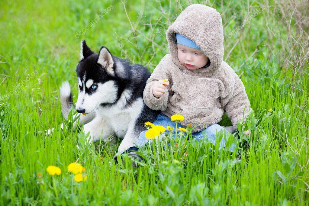 Child with puppy husky