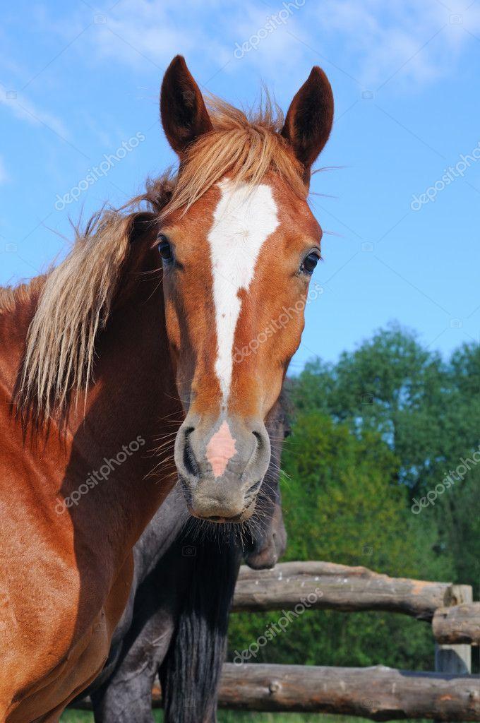 Pretty Horse Stock Photo C Boguslavovna 8915191