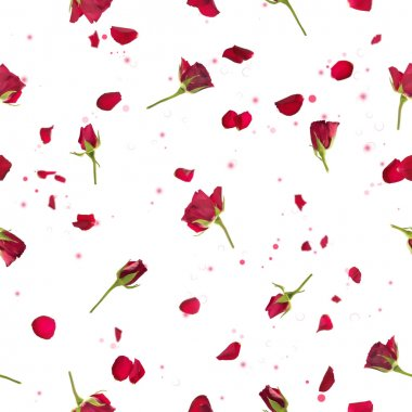 Repeatable flying, studio photographed red roses with petals, on a backlight, and bokeh particles, isolated on white stock vector