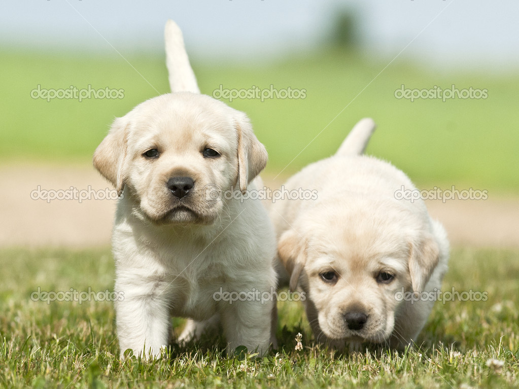 Two nice puppies