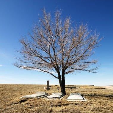 Three tombstones under a tree in cemetery. stock vector