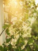Fotografia sole attraverso fiori